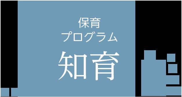 知育プログラム
